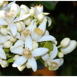 Aqua floral Neroli