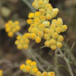 Aqua floral Smil - věčný květ