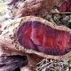 Růžové dřevo